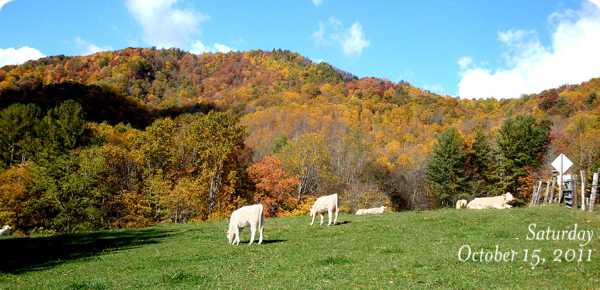 Cow Pasture In Valle Crucis