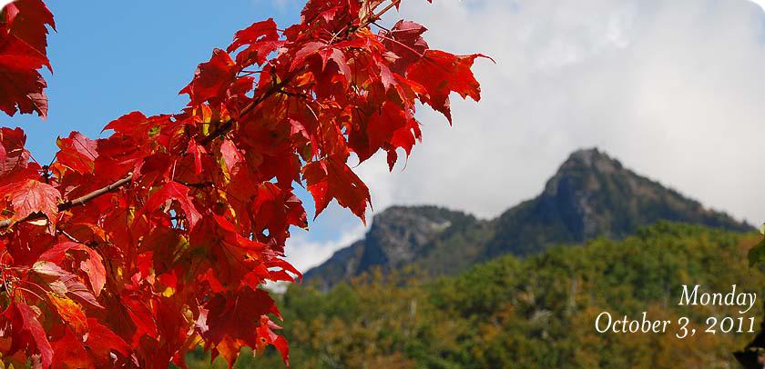Crimson Maple in MacRae Meadows