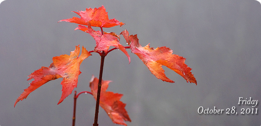 Lonesome Leaves