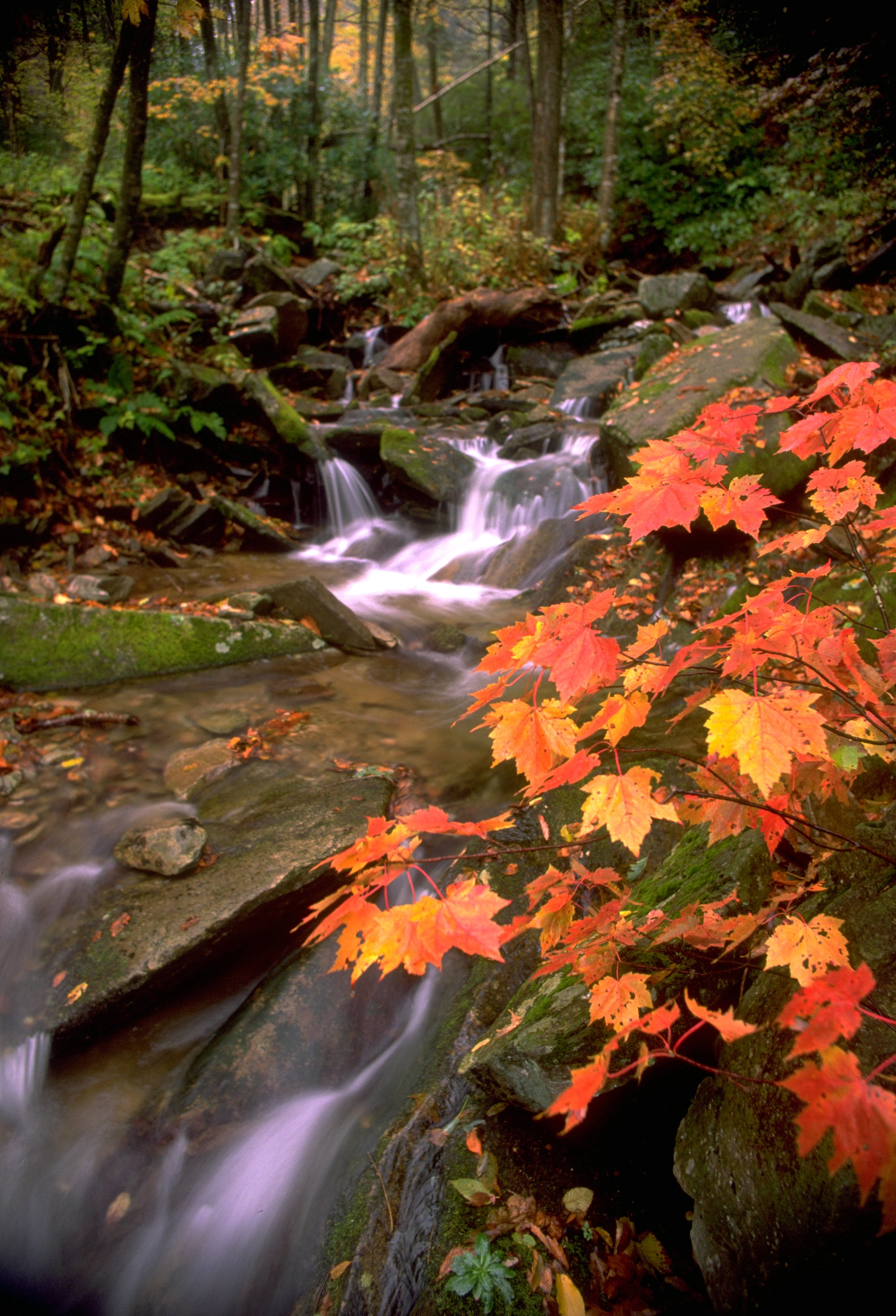 hi res photos fall grandfather mountain wonders never cease