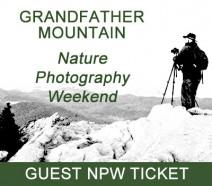 npw_guest_ticket