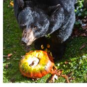 beary scary web1