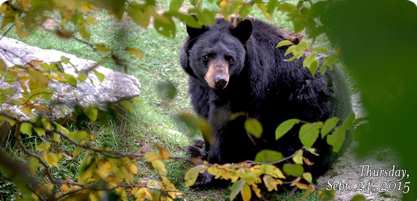 Bear Habitat