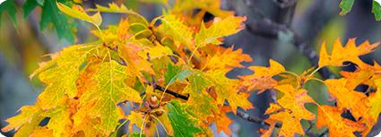 100415_gfm_scheer_foliage_SS_small