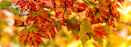 102716_gfm_maples_ss_small