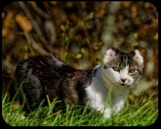 moochie_cat