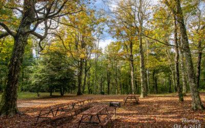 Woods Walk Picnic Area